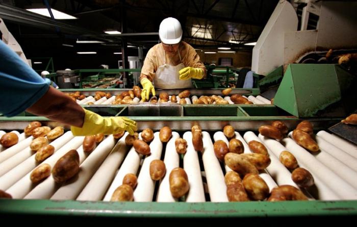 Бизнес-план по выращиванию картофеля