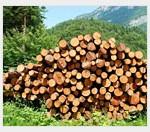 Как открыть лесопилку?